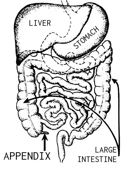 Appendix_(PSF)